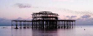Brighton Chartered Surveyor